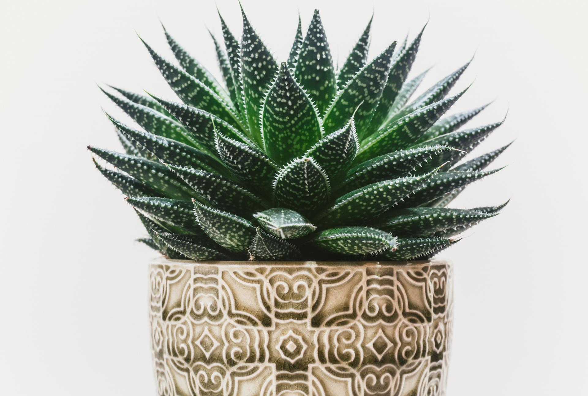 4 Benefits to Having House Plants in Your Apartment | Red ... on ornamental grasses red, nature red, flowers red, berries red, cactus red, peppers red, pots red, orchids red, design red, mums red, animals red,