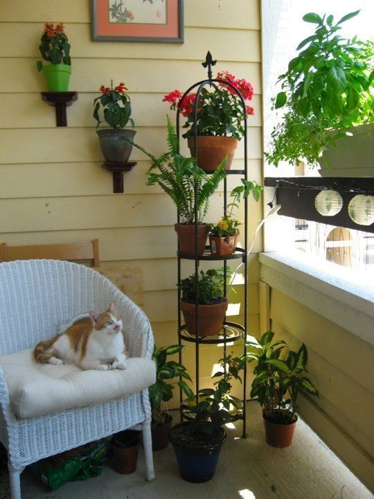 Low Maintenance Apartment Patio Gardening | Red Oak Properties