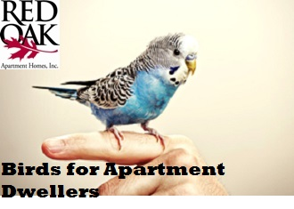 Birds That Are Good For Apartment Dwellers